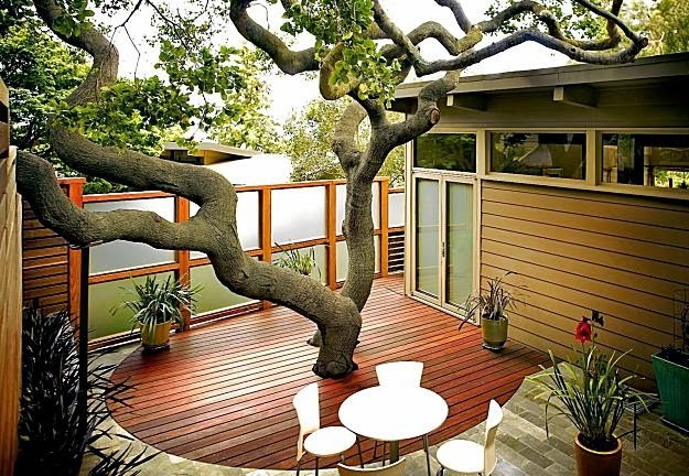 There is a tree inside the house elements at home - Decoraciones para jardines exteriores ...