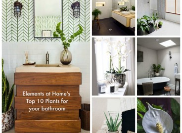 I love plants in the Bathroom.